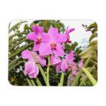 Orquídeas Imán