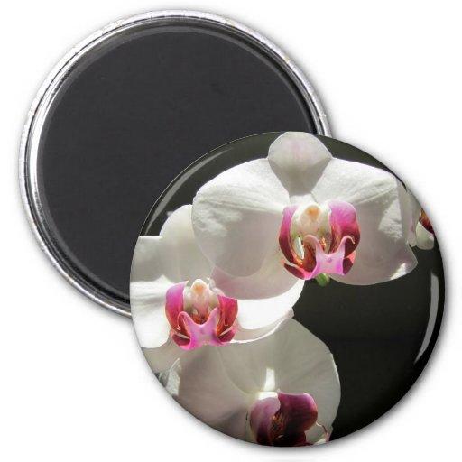Orquídeas Iman Para Frigorífico