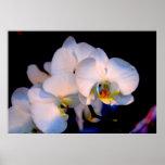 Orquídeas Impresiones