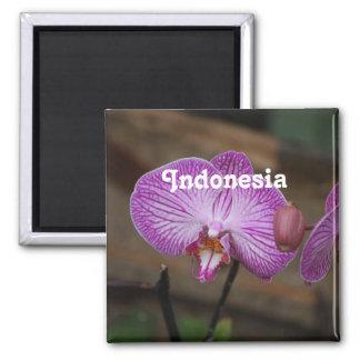 Orquídeas indonesias imanes de nevera