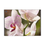 Orquídeas iPad Mini Carcasas
