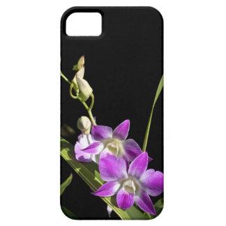 Orquídeas iPhone 5 Carcasas
