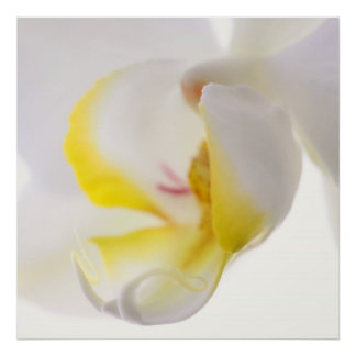 Orquídeas macro póster