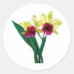 Orquídeas magentas y amarillas pegatinas redondas