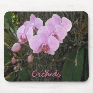 Orquídeas magníficas tapetes de ratón