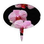 Orquídeas manchadas magenta aterciopelada en negro figuras de tarta