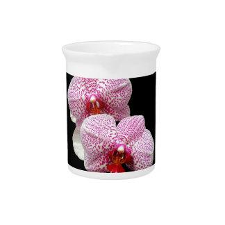Orquídeas manchadas magenta aterciopelada en negro jarra