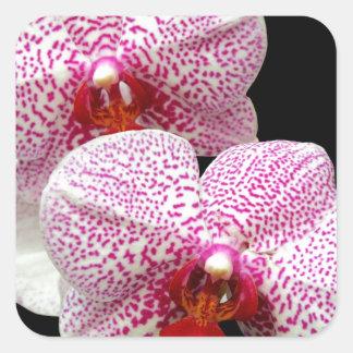 Orquídeas manchadas magenta aterciopelada en negro pegatinas cuadradases personalizadas