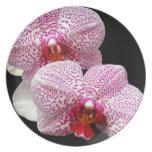 Orquídeas manchadas magenta aterciopelada en negro plato de cena