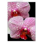 Orquídeas manchadas magenta aterciopelada en negro tarjetón