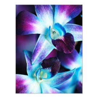 Orquídeas modificadas para requisitos particulares fotografía