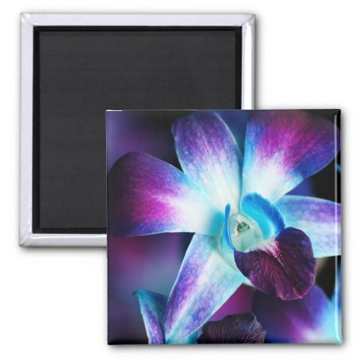 Orquídeas modificadas para requisitos particulares imán cuadrado