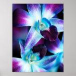 Orquídeas modificadas para requisitos particulares posters