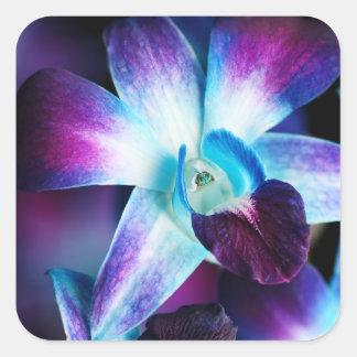 Orquídeas modificadas para requisitos particulares pegatina cuadrada