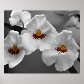Orquídeas monocromáticas póster