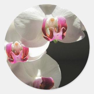 Orquídeas Pegatina Redonda