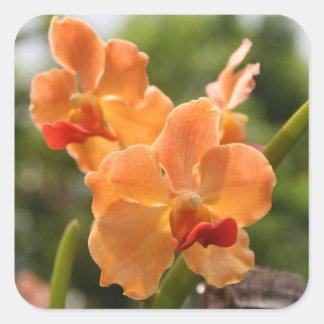 Orquídeas Pegatina Cuadrada