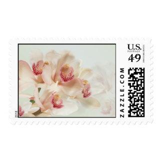 Orquídeas poner crema blancas en franqueo de la pl