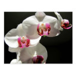 Orquídeas Postal