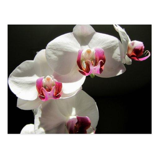 Orquídeas Postales