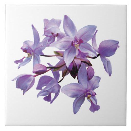 Orquídeas púrpuras con rocío azulejo