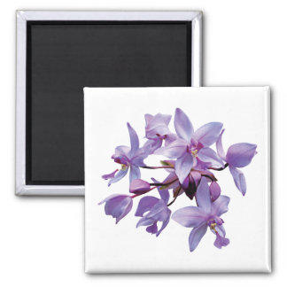 Orquídeas púrpuras con rocío imán cuadrado