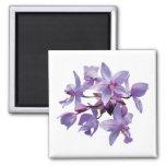 Orquídeas púrpuras con rocío imán para frigorífico