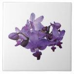 Orquídeas púrpuras delicadas azulejos