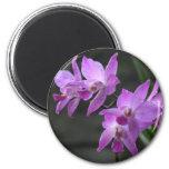 Orquídeas púrpuras iman de nevera