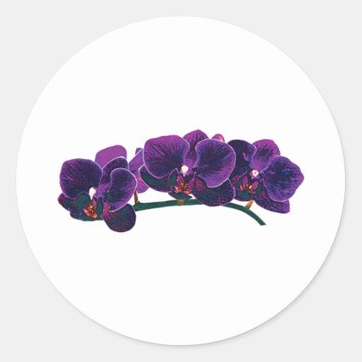 Orquídeas púrpuras oscuras del Phalaenopsis Pegatina Redonda