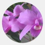 Orquídeas púrpuras pegatinas redondas