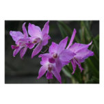 Orquídeas púrpuras poster