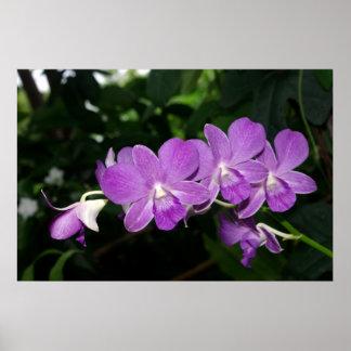 Orquídeas púrpuras póster