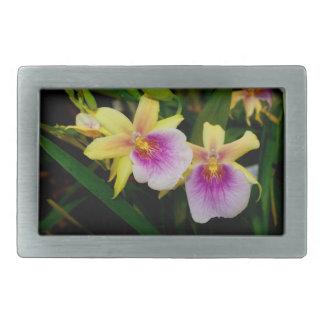 Orquídeas púrpuras rosadas amarillas de la puesta hebillas de cinturon rectangulares