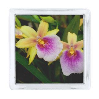 Orquídeas púrpuras rosadas amarillas de la puesta insignia plateada