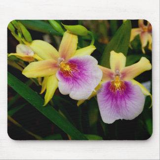Orquídeas púrpuras rosadas amarillas de la puesta mouse pads