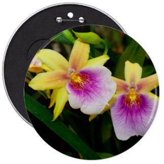 Orquídeas púrpuras rosadas amarillas de la puesta pin redondo de 6 pulgadas