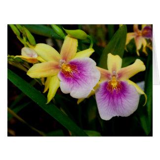 Orquídeas púrpuras rosadas amarillas de la puesta tarjeta de felicitación grande