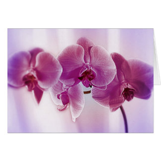 Orquídeas púrpuras tarjeta de felicitación