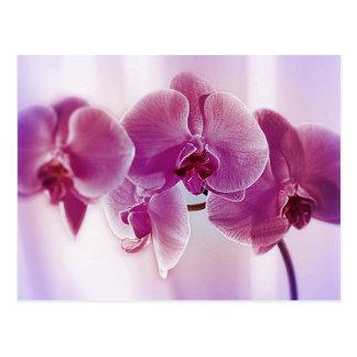 Orquídeas púrpuras postal