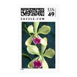 Orquídeas púrpuras y verdes sellos