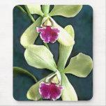 Orquídeas púrpuras y verdes tapete de raton