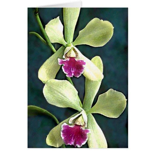 Orquídeas púrpuras y verdes tarjetas
