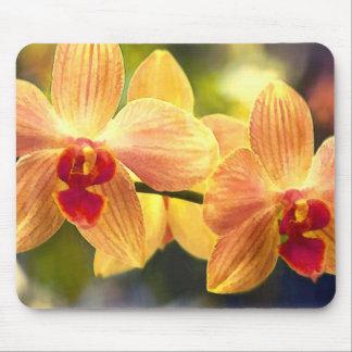 Orquídeas rayadas amarillas y rojas del Phalaenops Alfombrillas De Raton