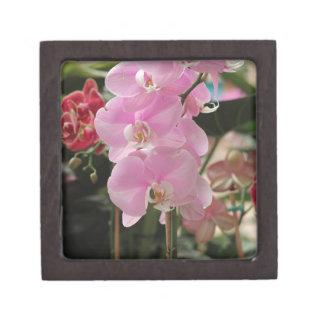 Orquídeas rosadas cajas de joyas de calidad