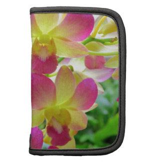 Orquídeas rosadas de Yelow Planificador