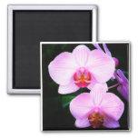 Orquídeas rosadas del paraíso iman de frigorífico