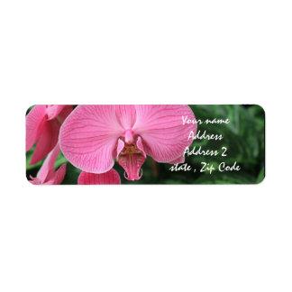 Orquídeas rosadas etiquetas de remite
