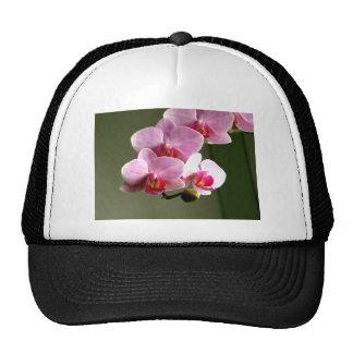 Orquídeas rosadas gorras