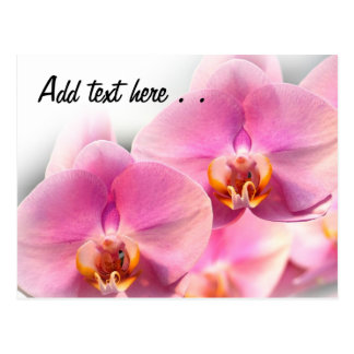 Orquídeas rosadas hermosas en un fondo suave tarjeta postal